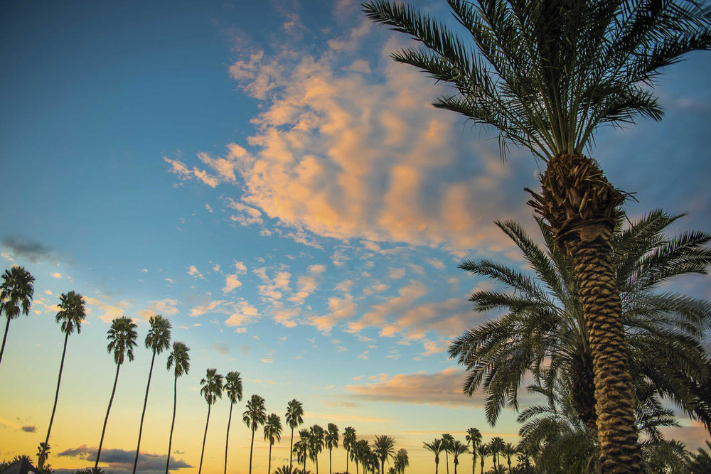 Palm Trees Sunset.jpg