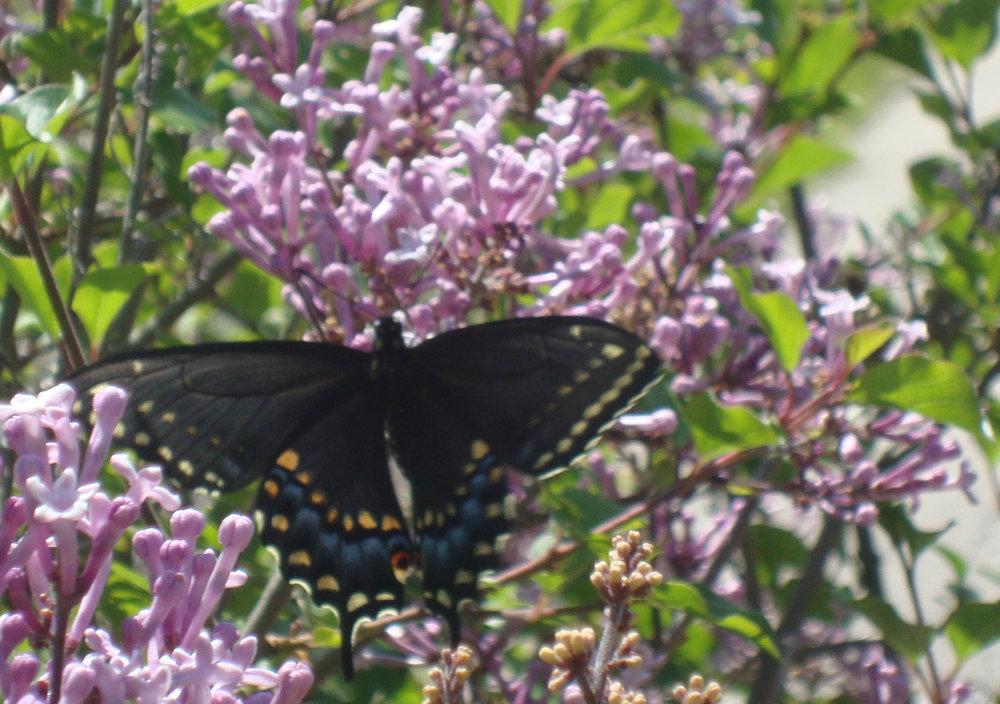 Spring 2012 2201.jpg