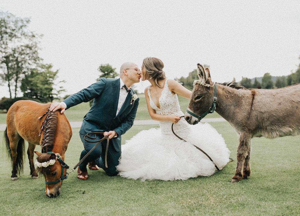 wedding_donkey_horse.jpg