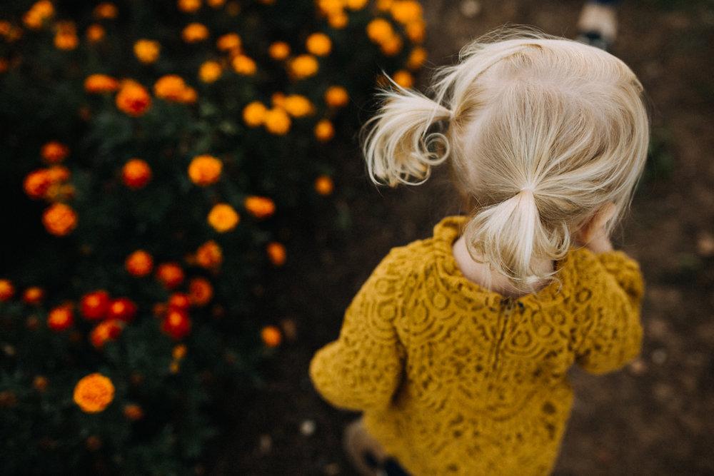 springfield family photographers