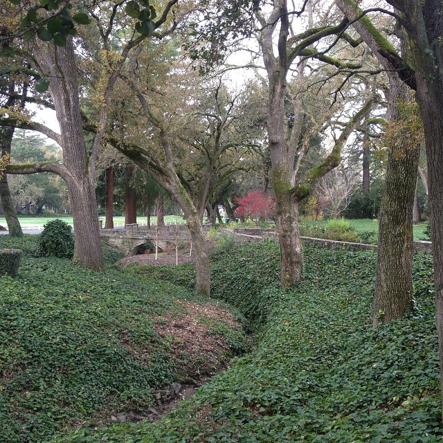 Pretty little creek #landscaping #woods #creek #ivy #backyards #sanfrancisco #bayarea #homeimprovement