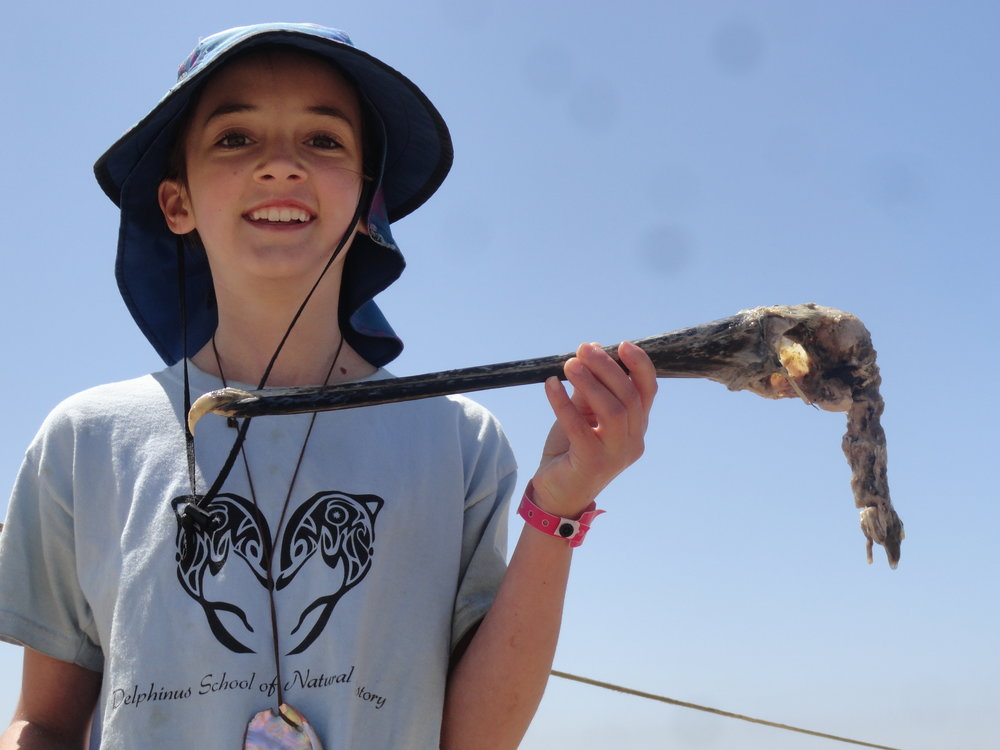 Beach scavenger hunts reveal much about the life cycle of birds and animals around the estuary.