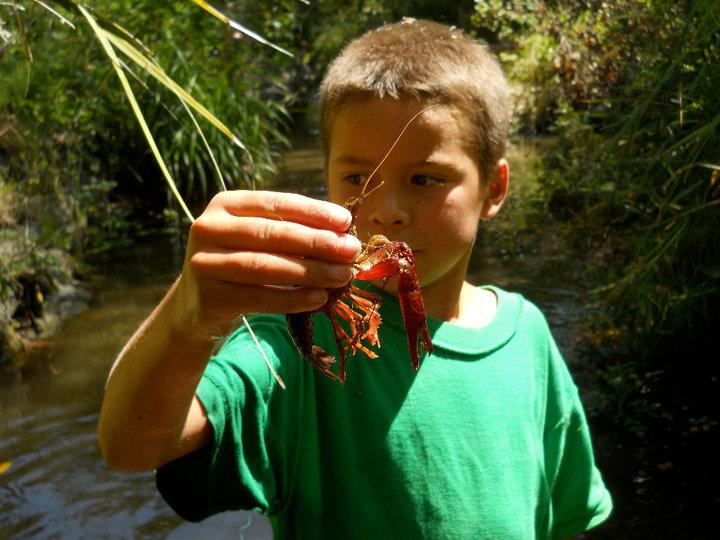 Examining crayfish up close.