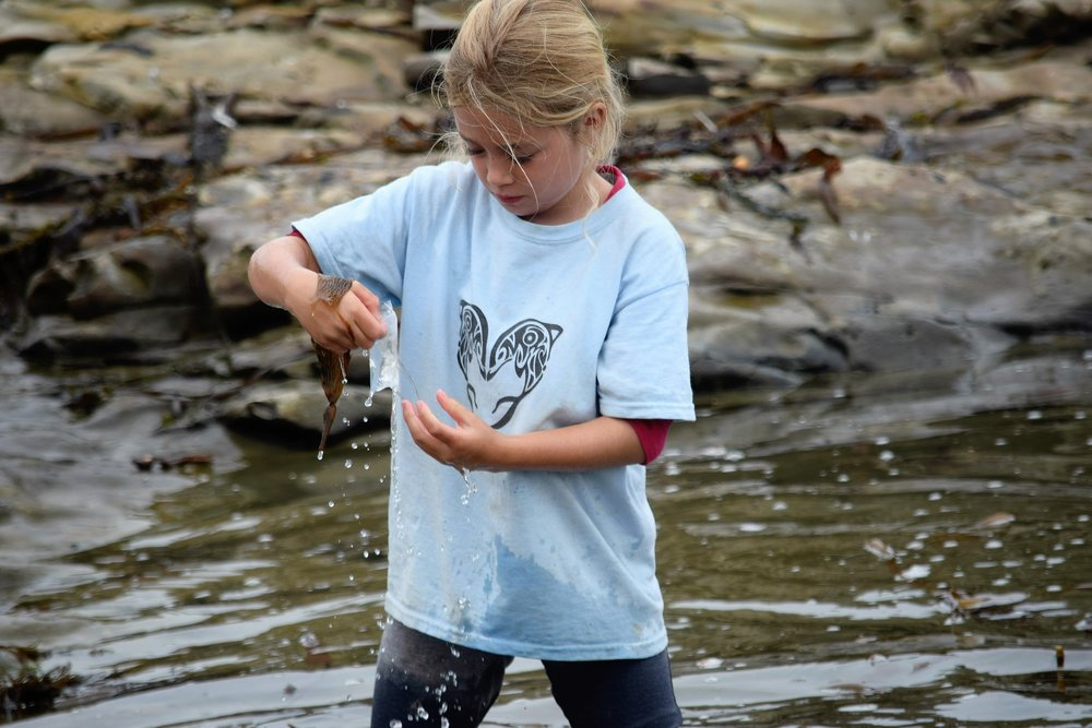 Examining tidepool organisms @ Hazards Reef