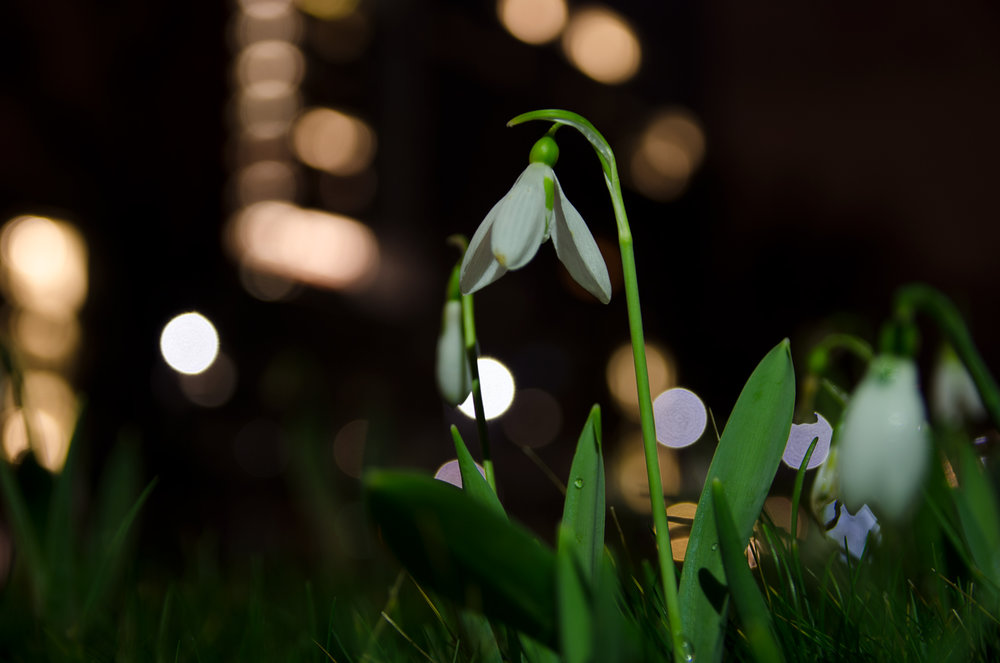 lentebijnacht-1.jpg