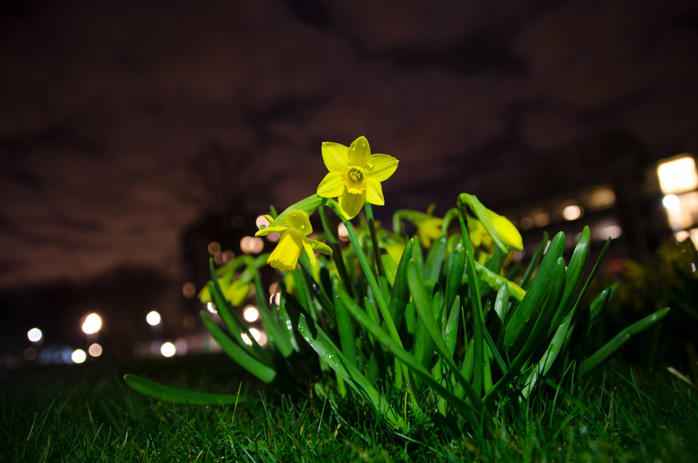lentebijnacht-2.jpg