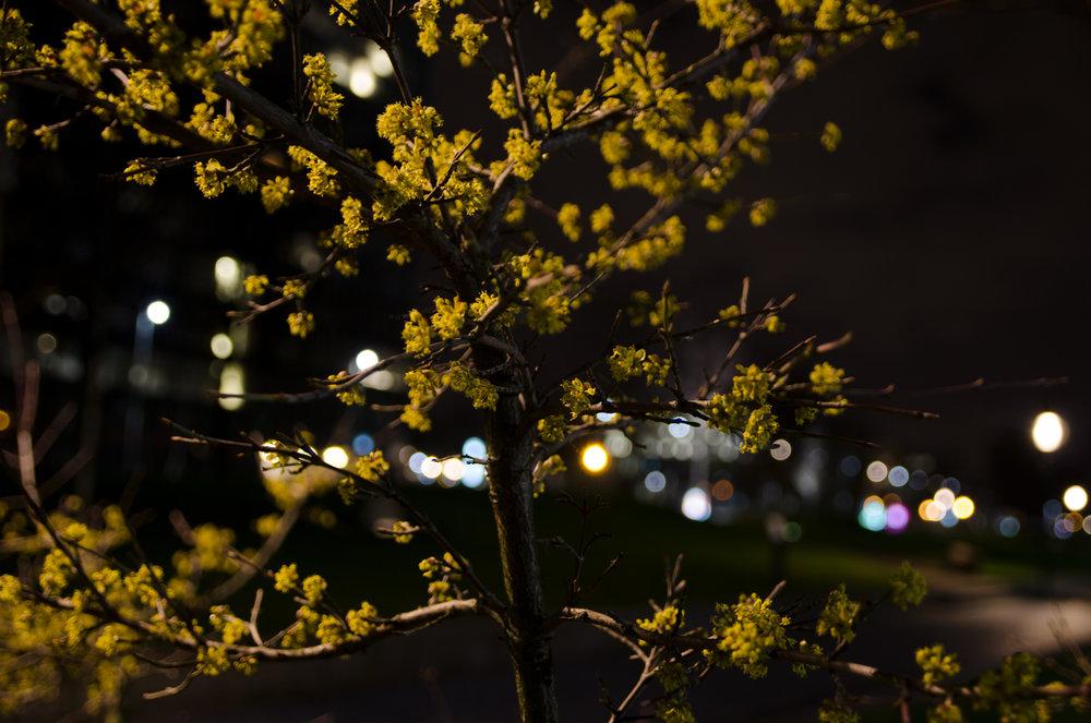 lentebijnacht-4.jpg