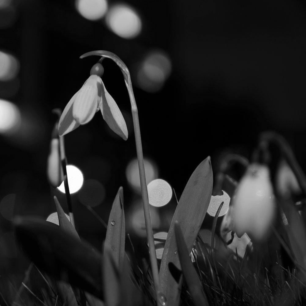 <b>lente<br>bij<br>nacht</b><br>2017