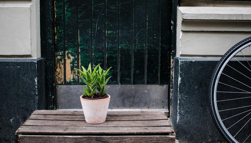 Aloe Vera    Aloe Vera er en super nem plante at holde. Den kan nemlig lagre en stor mængde vand, så du næsten slipper for at vande den.