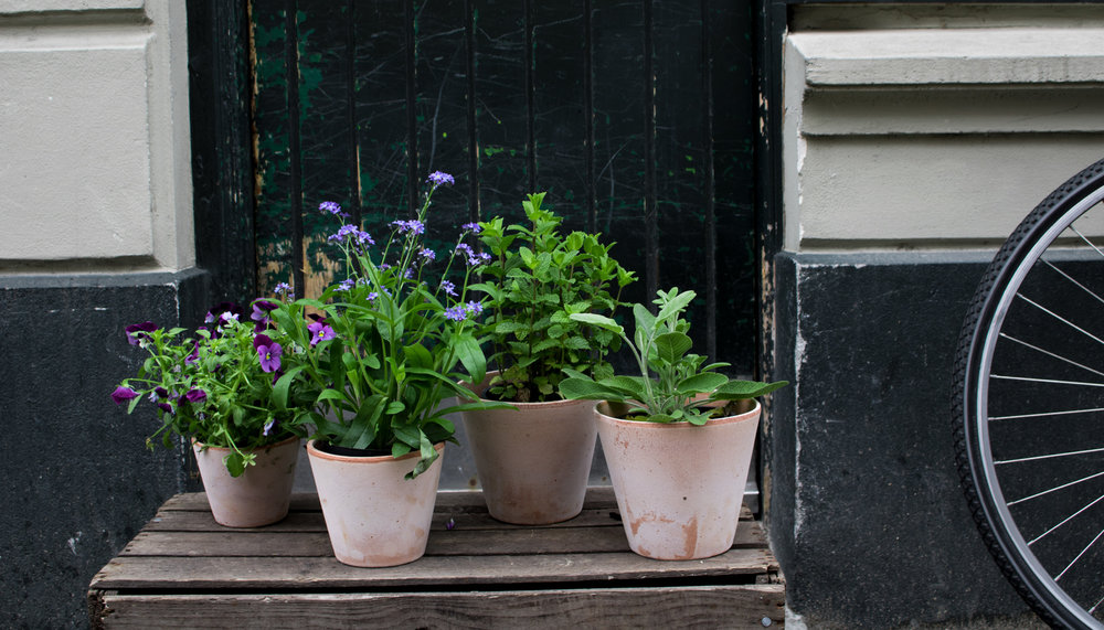 Tips til Altanen    Når det endelig er sæson til at pryde altanen med blomster, er det vigtigt at holde dem ved lige, så her er vores bedste tips og tricks.