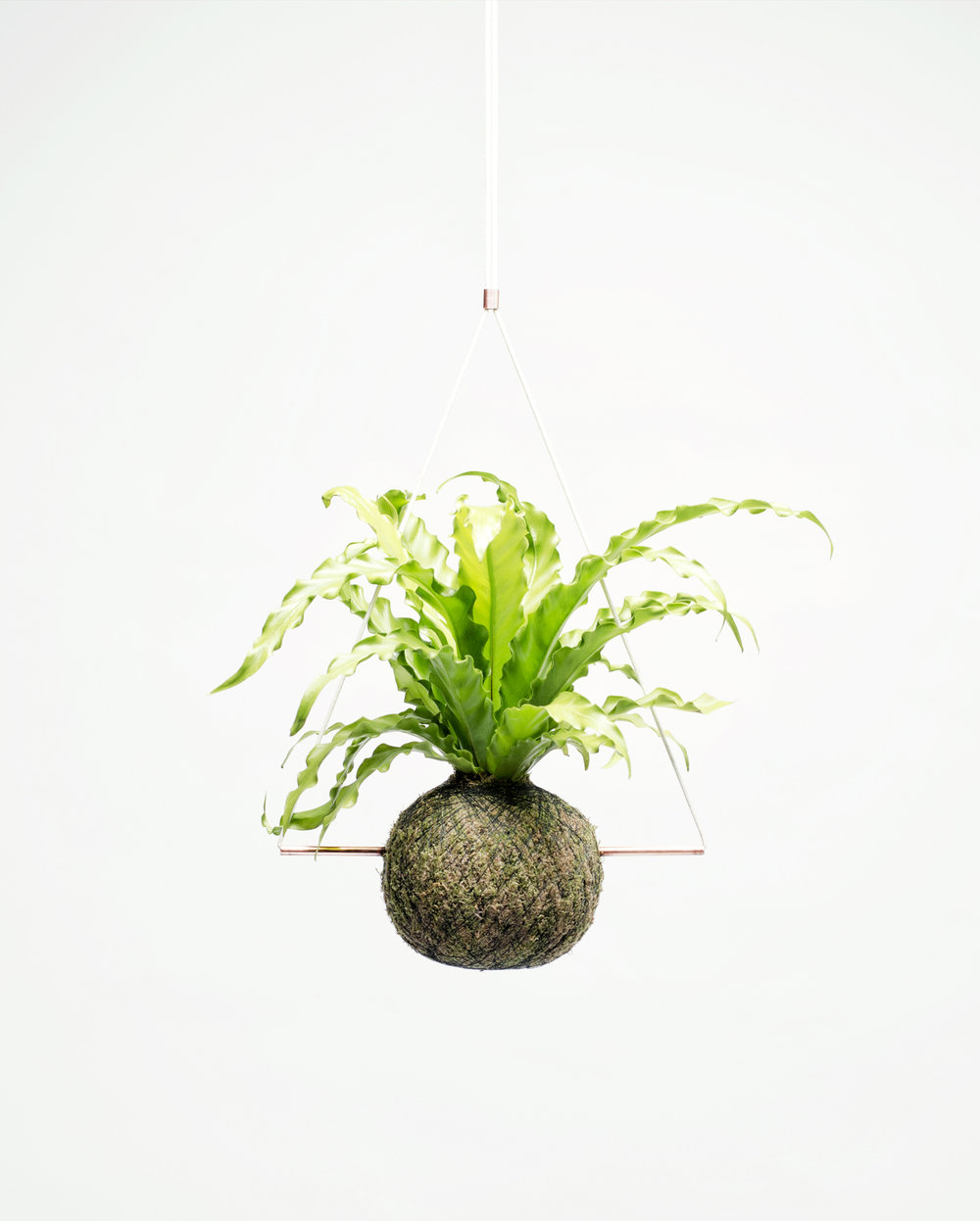 The Kokedama  Collection