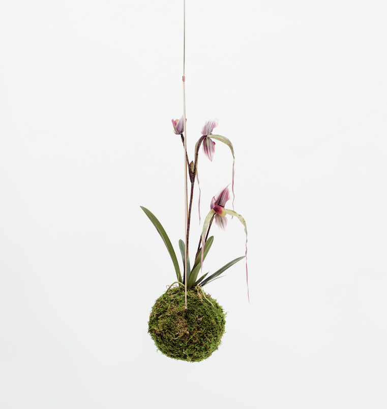 Medium Kokedama - Orchid