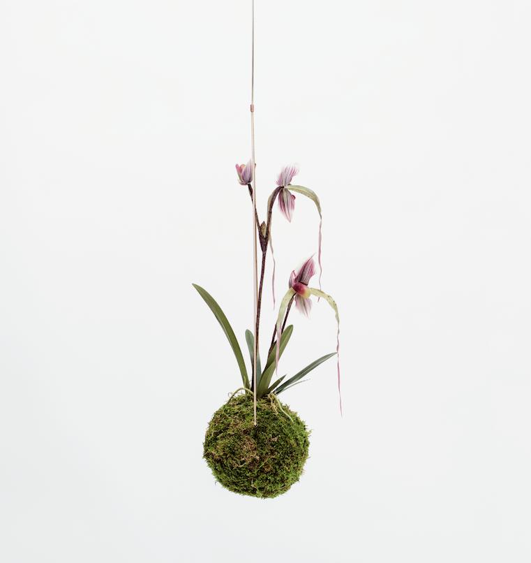 Medium Kokedama - Orchid