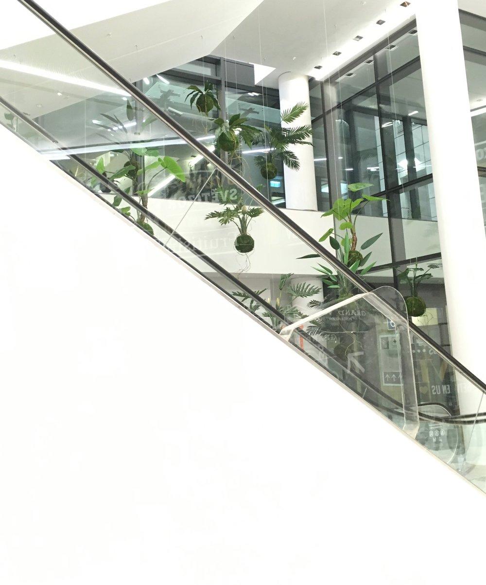 WeSmellTheRain_Kokedama_Installation