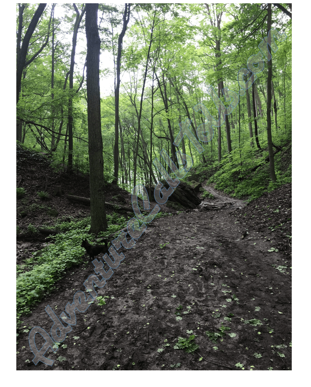 trail-min.png