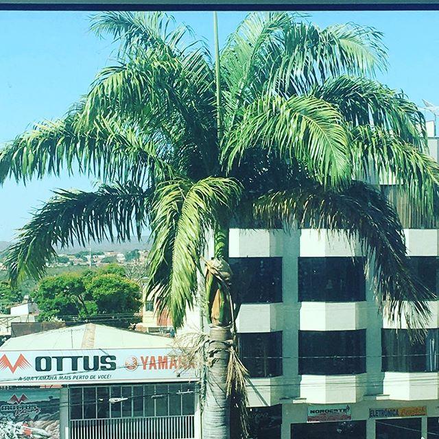 I'm as tall as a palm tree 🌴 #ihadhelp #3rdstorybalcony #ifinallygotabalcony #paracatu #paracatubrazil #brazil #palmtree #thatview #tropical #ruralbrazil #travel #travelgram #travellife #travelingram #travelblogger #letsgetlost #adventurecallstous