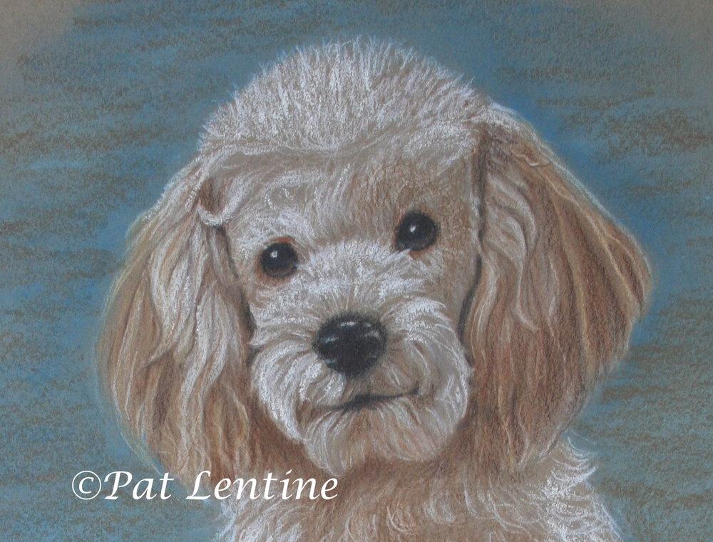 poodle-pup-1.jpg