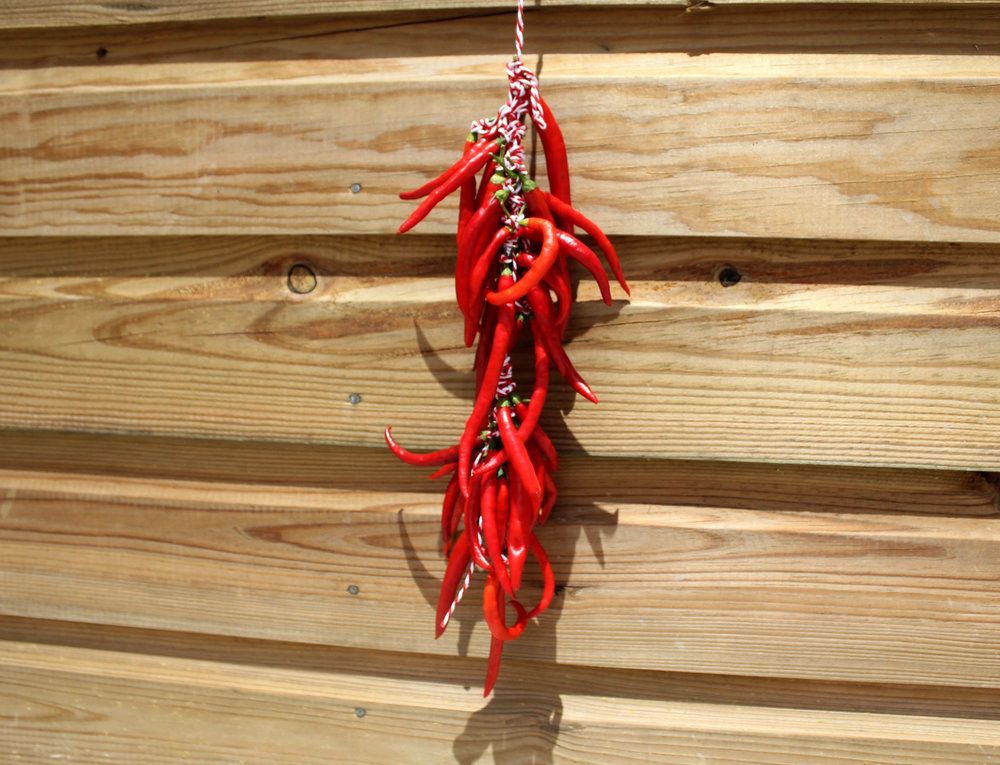 You can hang them outside to dry in the sun, or hang them in your house for some beautiful edible decoration!