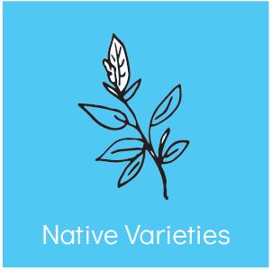 nativevarieties.jpg