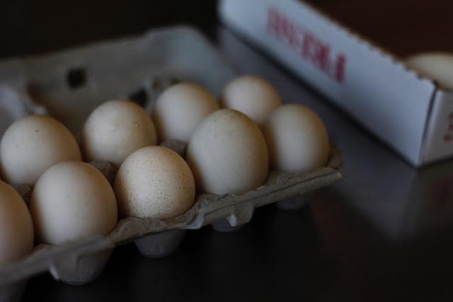 EHSTL_WFTT_Eggs01.JPG