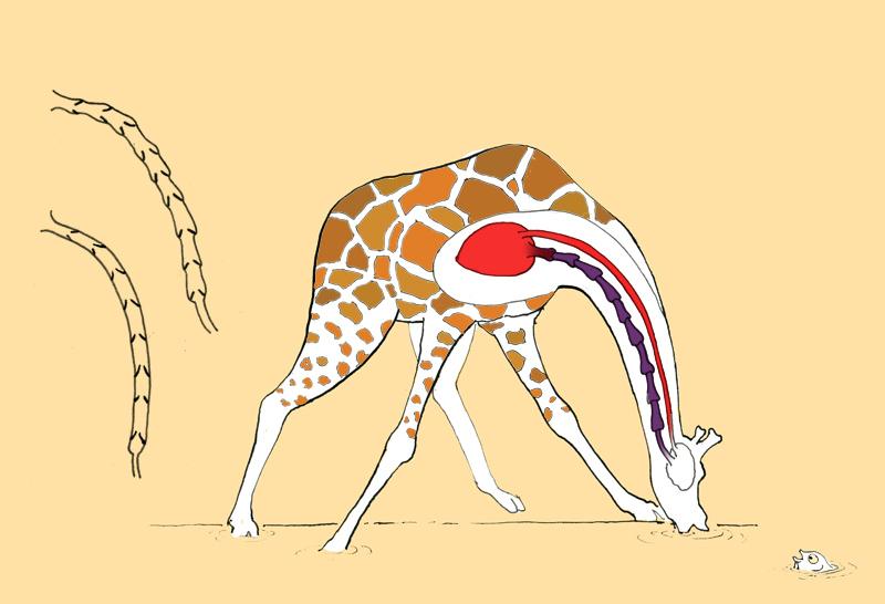 Animal Anatomy for Children — Tom Reed Studio