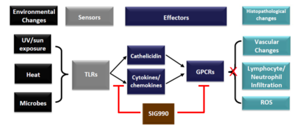 Figure 1. Proposed molecular pathogenesis of Rosacea: SIG990 inhibits GPCR and TLR signaling. Figure above was adapted from [1]