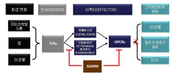 그림 1. 빨간코의 분자생물학적 발병 기전 제시 SIG990는 GPCR 및 TLR 신호를 억제한다. 위의 그림은 [1]을 수정한 것임.