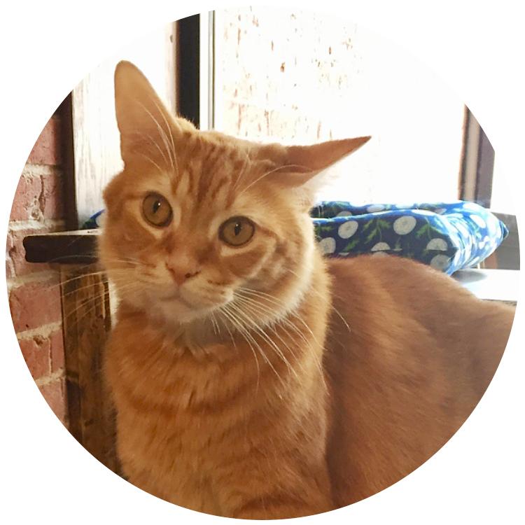 #17 Garfield