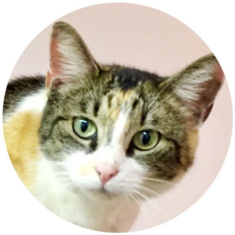 #54 KitCat