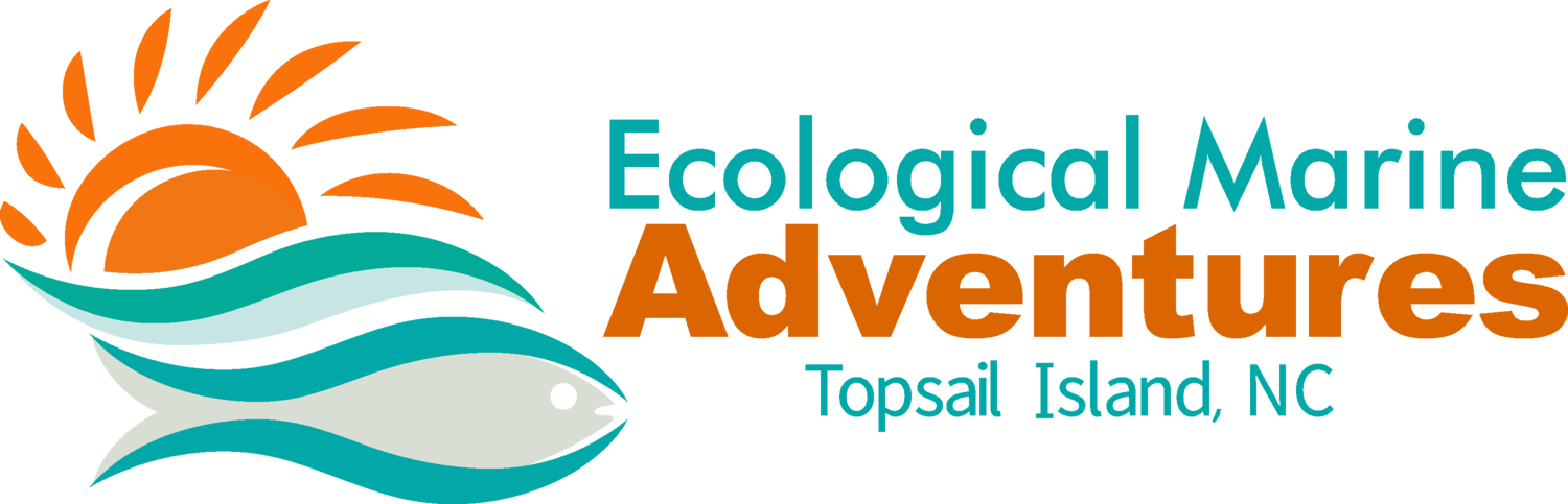 Ecological Marine Adventures