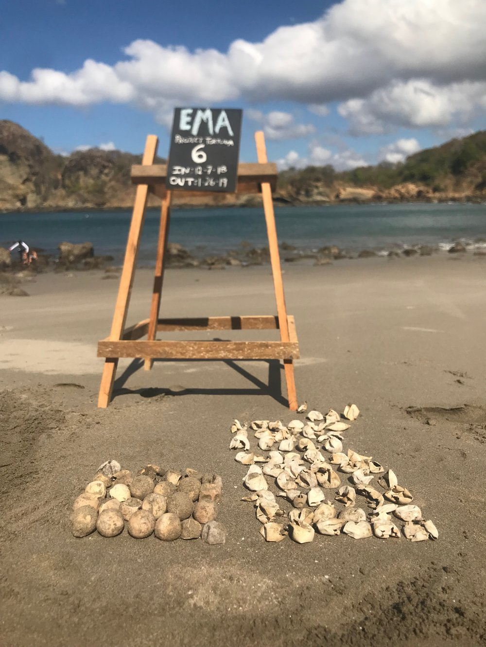 Project: Tortuga is run from Tola, Nicaragua.    Here is the data from this excavated nest:  82 total eggs excavated  57 hatched eggs  18 unhatched and completely intact eggs  7 broken eggs  0 dead in nest  0 live and stranded hatchlings