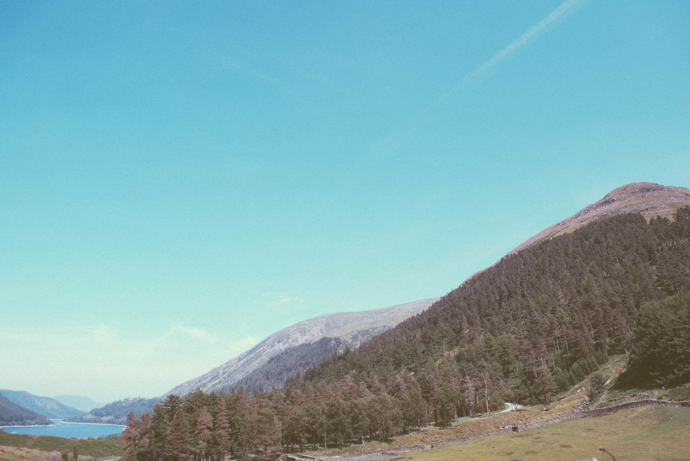 Forestry on a hillside by Thirlmere