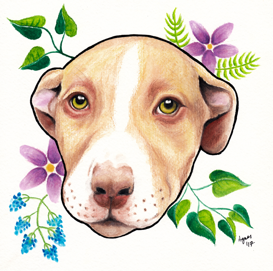 "Nova - Watercolor pencil & ink on watercolor paper, 8x8"""