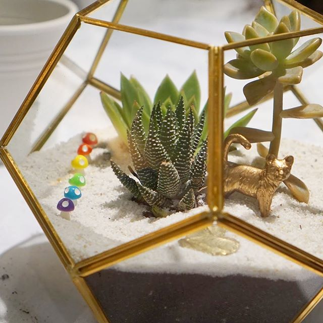 L O V E  i s  L O V E Happy pride weekend Toronto! #loveislove #loveisloveislove #datenight #toronto #lovetoronto #pride . #succulents #wedding #terrarium #nightlife #plantbased #plantlove #succulentgarden