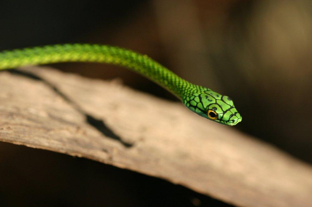 Rope Snake.jpg