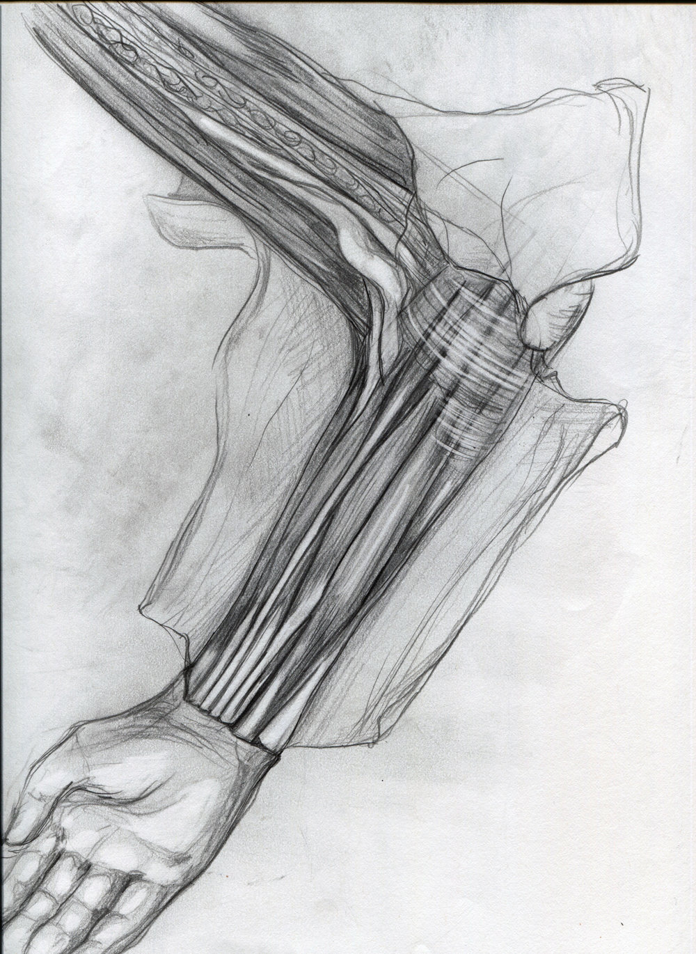 muscles of arm.jpg
