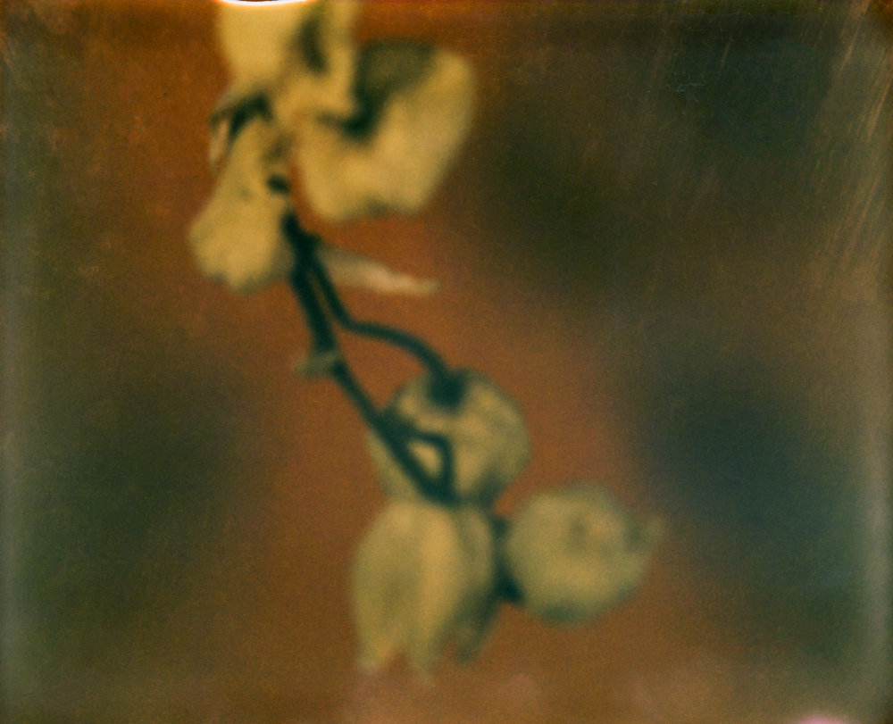julien_capelle_polaroid_21