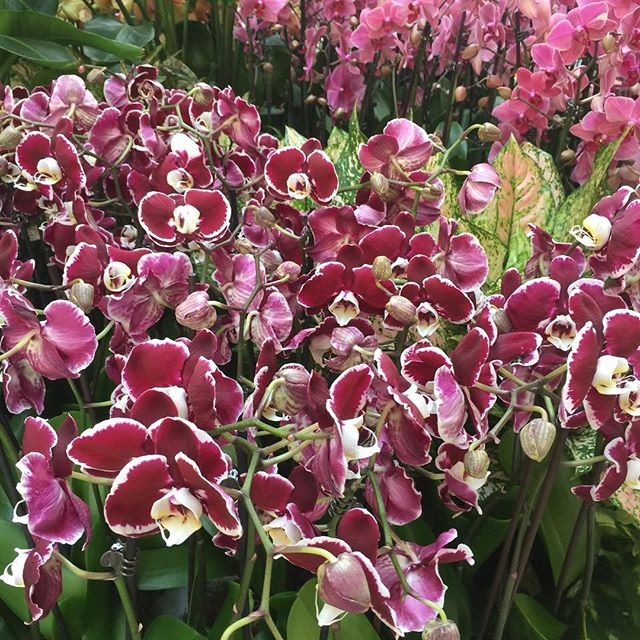 #Inspiration can come from anywhere even these #beautiful #orchids.