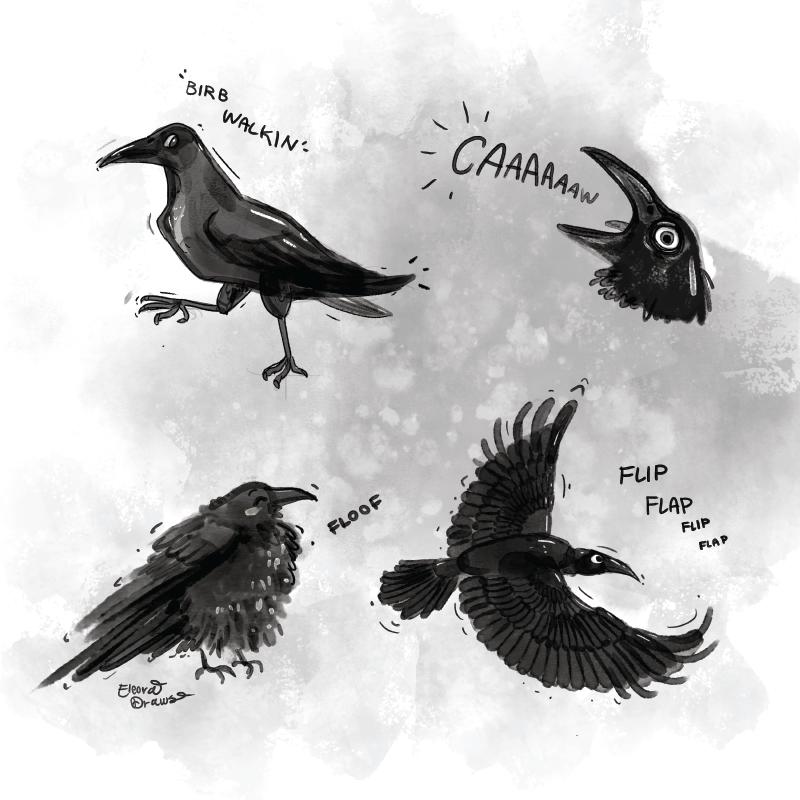 Raven Birb Doodles