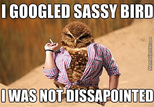 sassy-bird-is-sassy_o_4145335.jpg