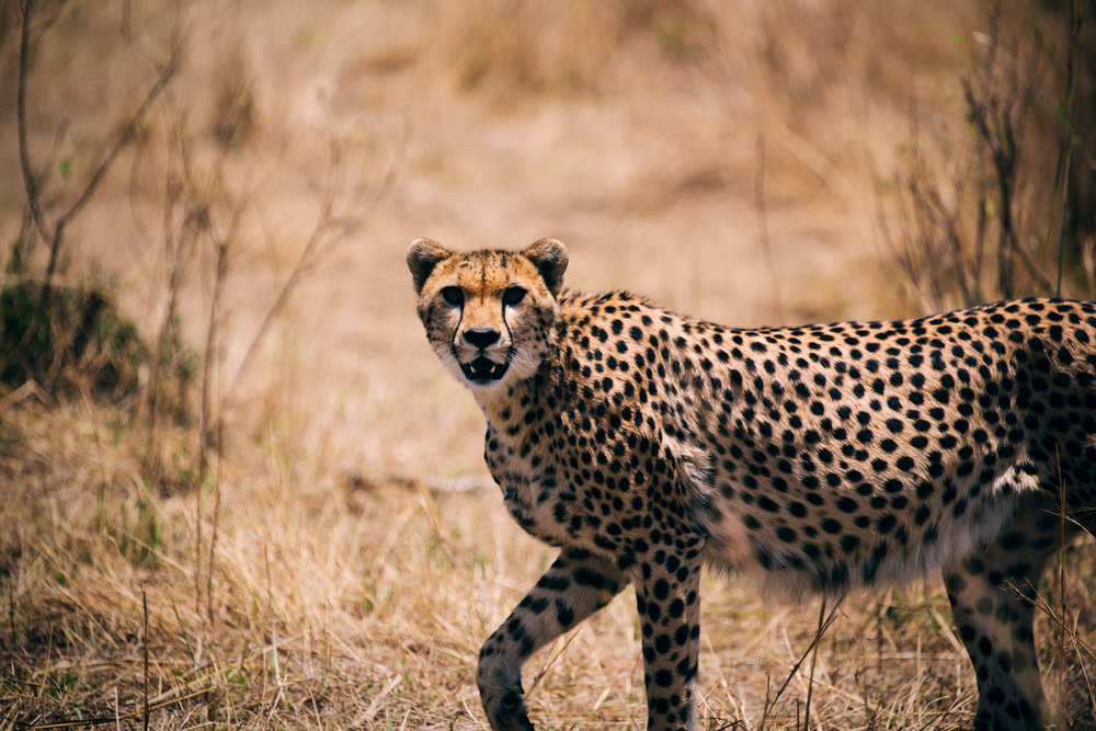 SHK_20160923_Kenya-MasaiMara_4270.jpg