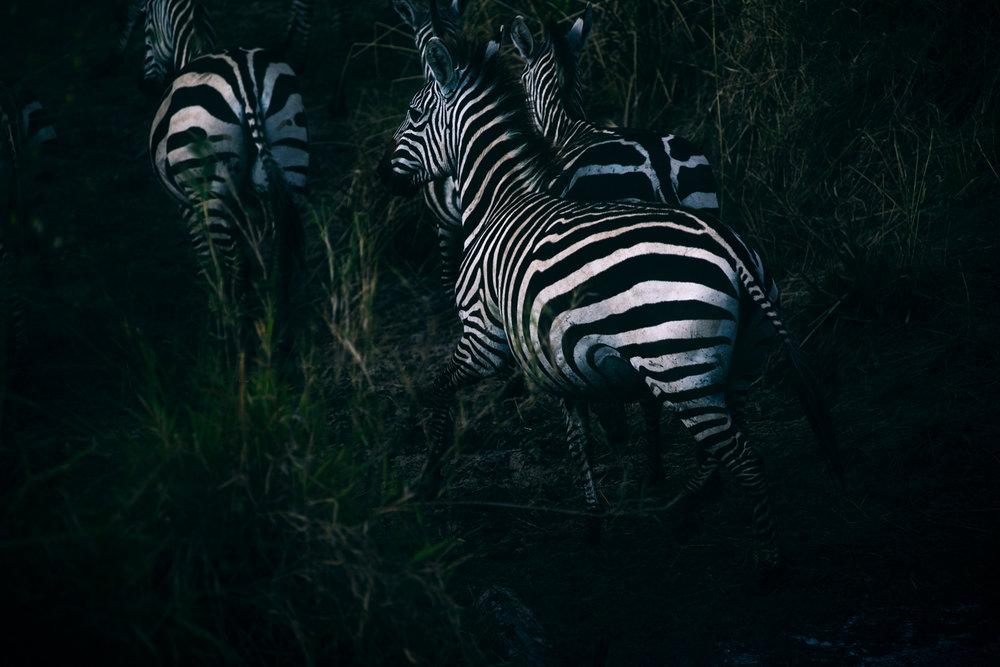 SHK_20160923_Kenya-MasaiMara_4371.jpg