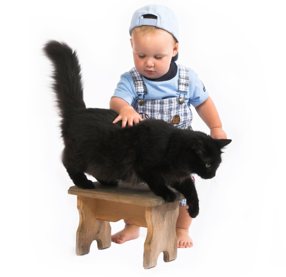 bigstock-baby--blackcat-794427.jpg