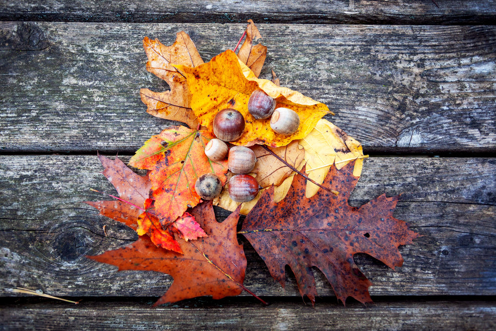 A flat lay of leaves and acorns