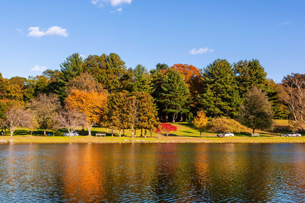 Vibrant colors at the pond