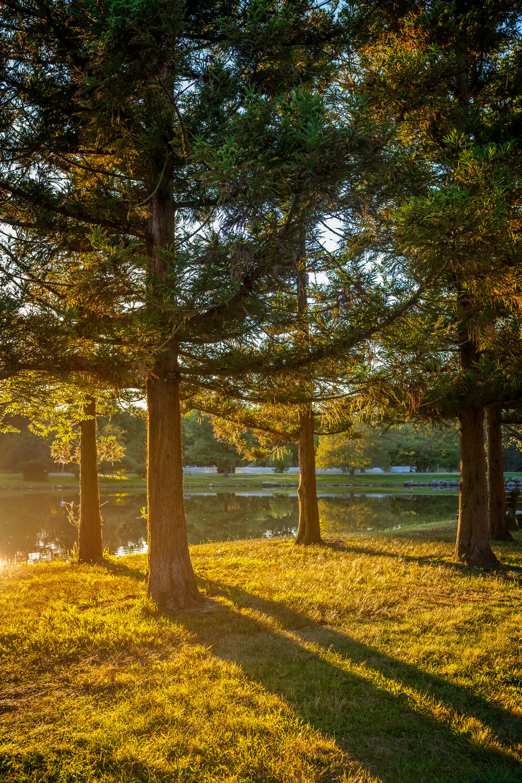 Golden sunset in the park