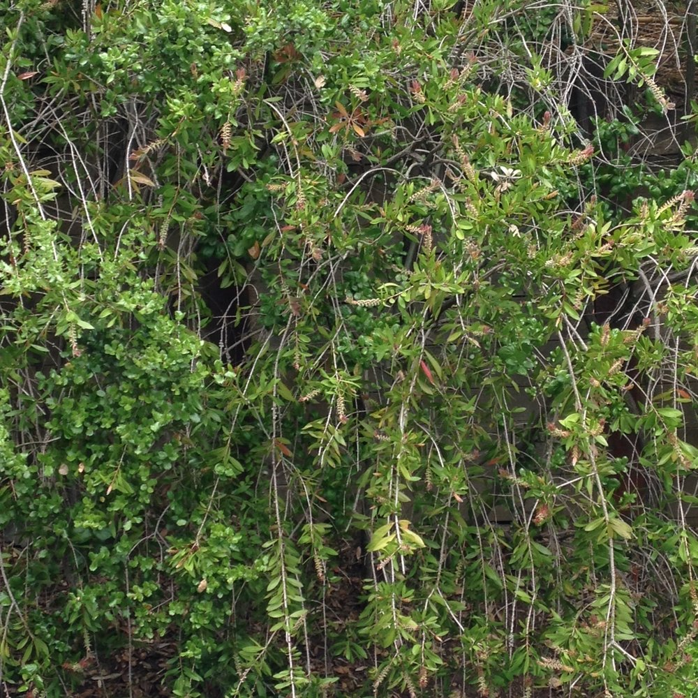 orinda greenery 1.JPG