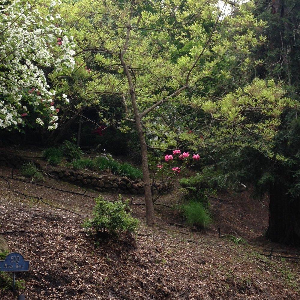 orinda greenery 4.JPG