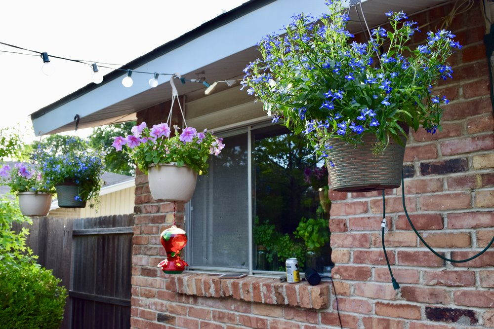Pretty hanging baskets.. just waiting for the birdies to find their food!