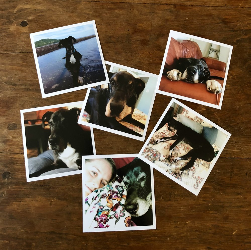 Some of the pics I printed of Gus Gus!